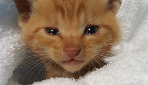 猫の飼い方~はじめて猫を飼う前に知っておくこと~