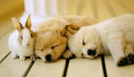 旅行や出張のとき犬はどうするの?~4つの選択肢~