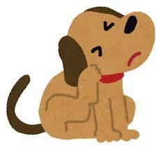 犬のアトピー性皮膚炎の薬を通販買ってみた!効果は?