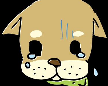 【犬、猫】白内障の目薬を通販で買ってみた!使ってみた効果は?