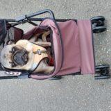 三本足の犬にペットカートを購入!使い心地は?